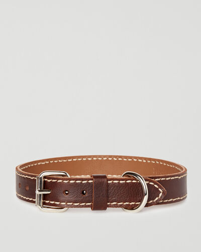 Roots-New For This Month Dog Accessories-Medium Leather Dog Collar-Chocolate-A