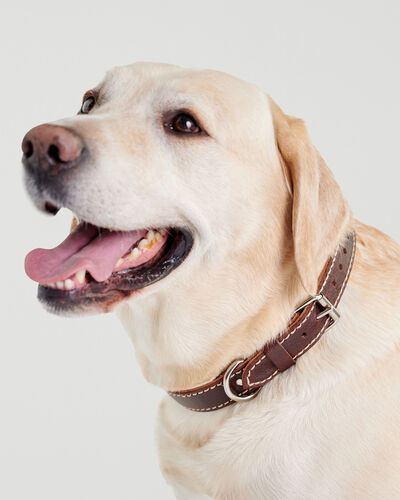 Roots-New For This Month Dog Accessories-Large Leather Dog Collar-Chocolate-A