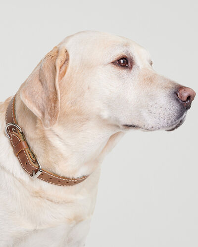Roots-New For This Month Dog Accessories-Large Leather Dog Collar-Natural-A