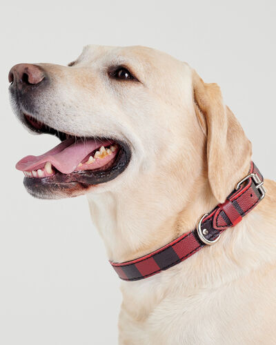 Roots-New For This Month Dog Accessories-Large Leather Dog Collar-Cabin Red-A