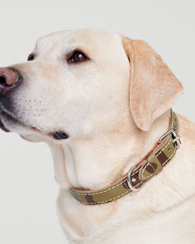 Roots-New For This Month Dog Accessories-Large Leather Dog Collar-Green Camo-A