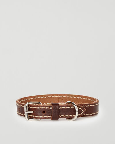Roots-New For This Month Dog Accessories-Extra Small Leather Dog Collar-Chocolate-A