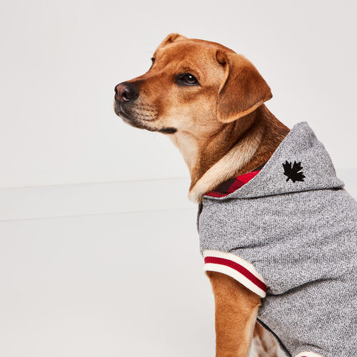 Roots-New For November Roots X Canada Pooch®-Canada Pooch Hoody Size 18-Salt & Pepper-A