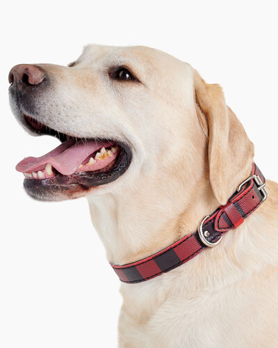 Roots-New For March Dog Accessories-Large Leather Dog Collar-Cabin Red-A