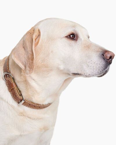 Roots-New For March Dog Accessories-Large Leather Dog Collar-Natural-A